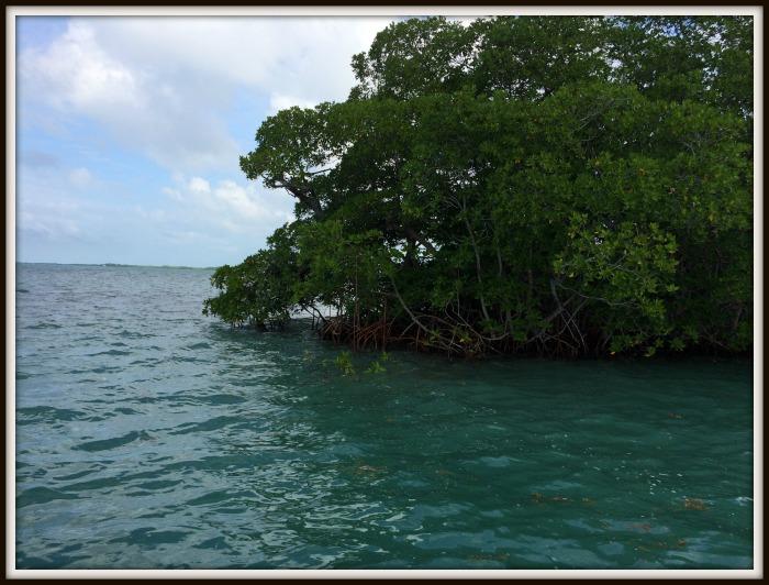 Belize-reef