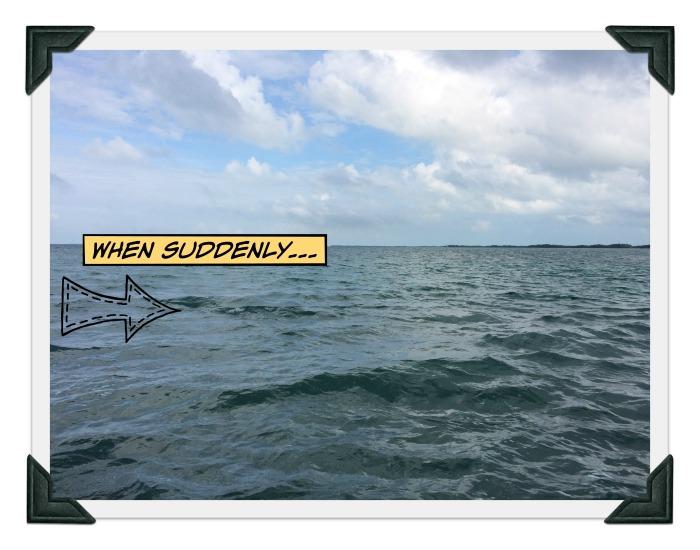 dolphin-spotting-Belize