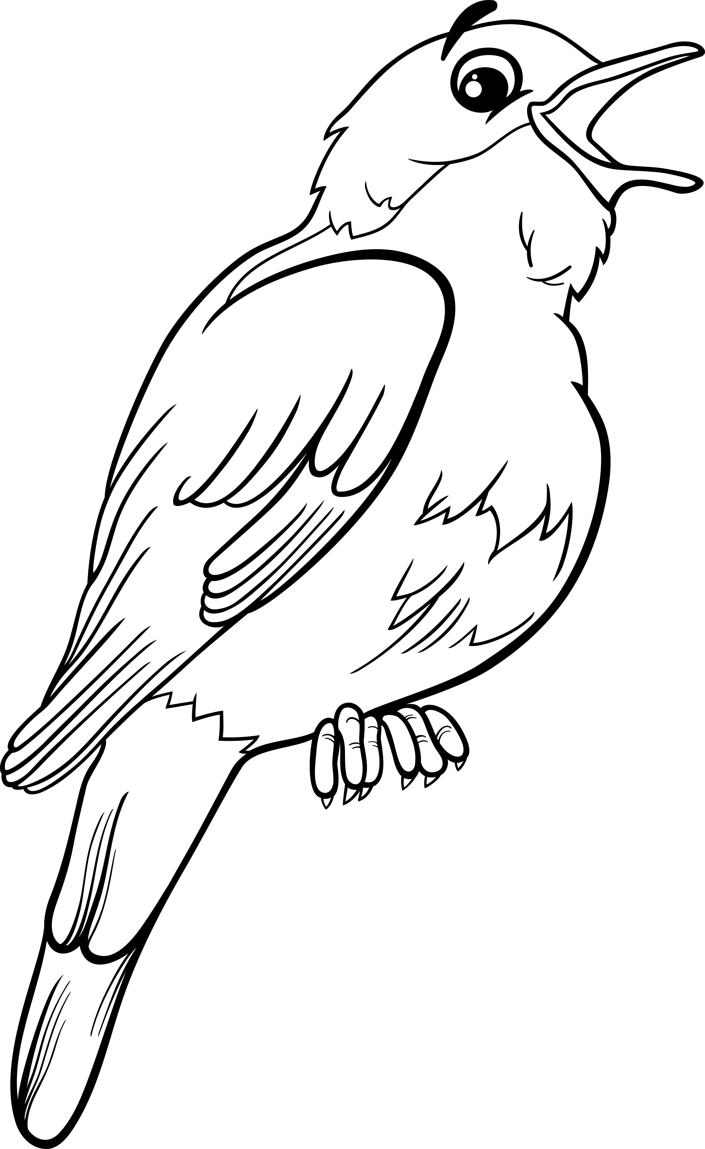 Bird colouring page printable