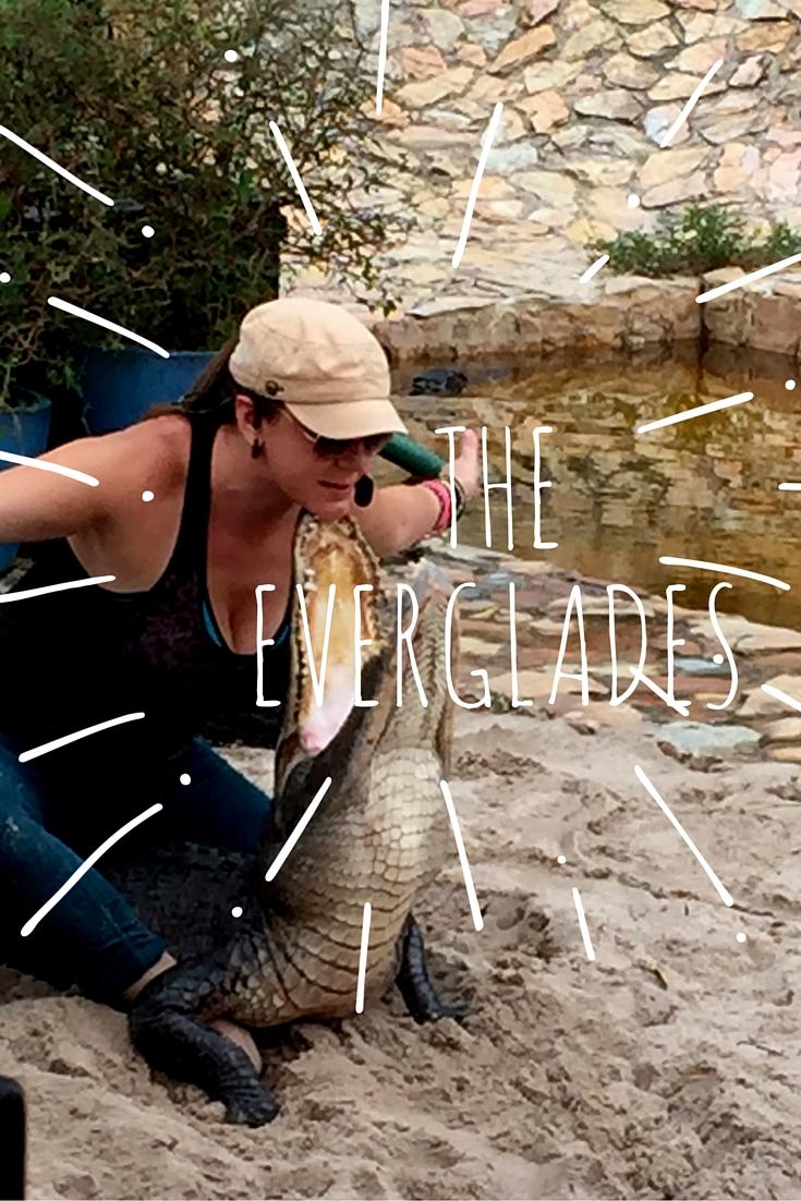 alligator_facts