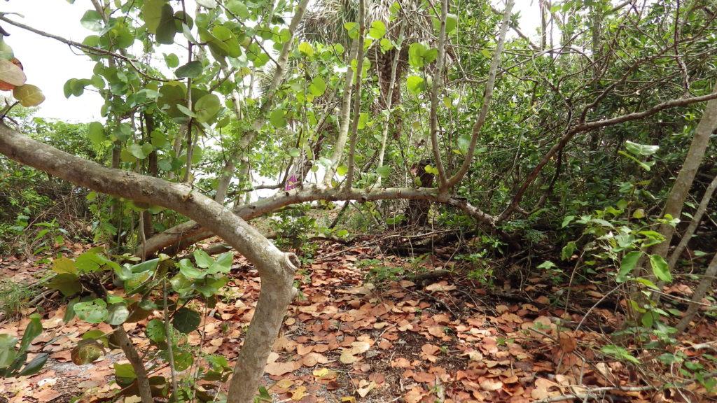 Hobe_sound_nature_walk