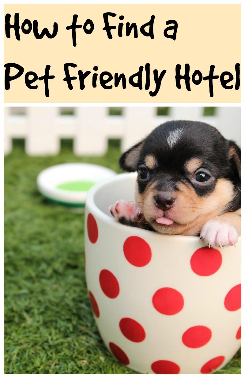 pet_friendly_hotels