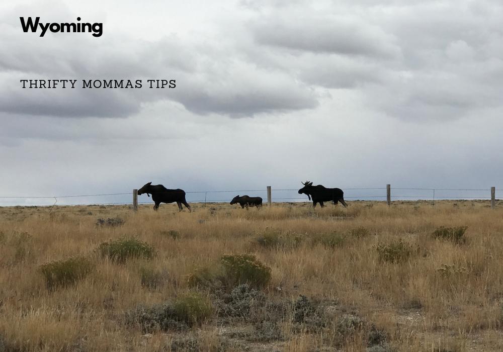 moose_family_wyoming