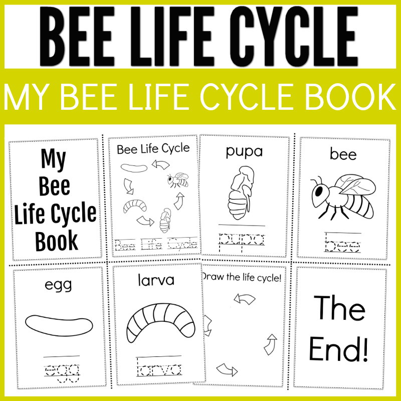 bee life cycle activity book