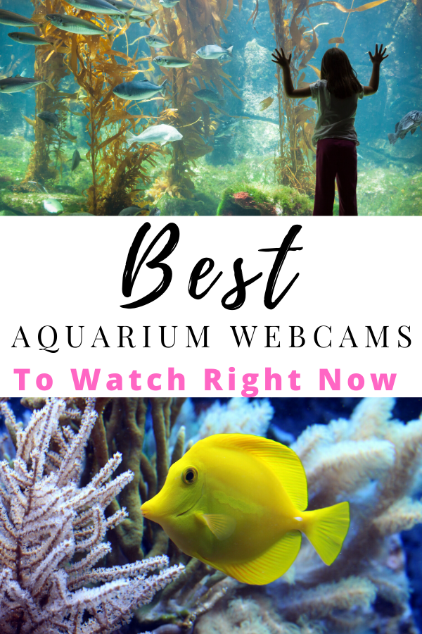 aquarium webcams