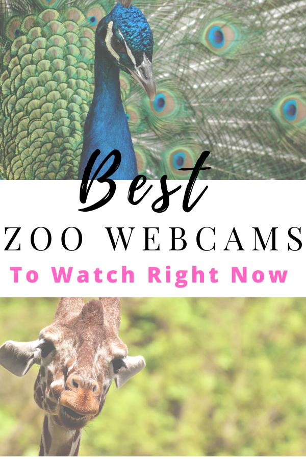 best_webcams