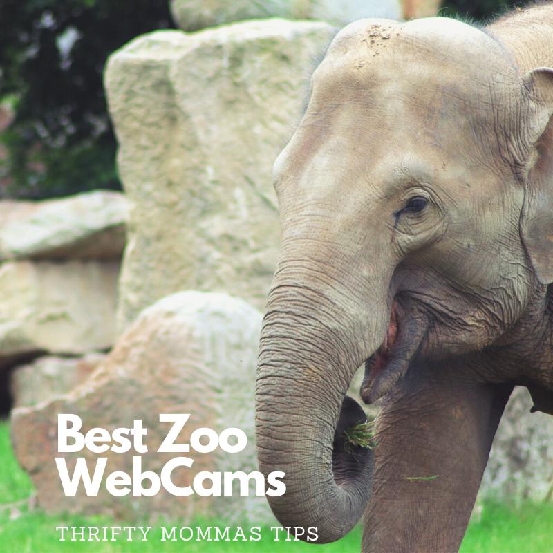 zoo_webcams_elephant