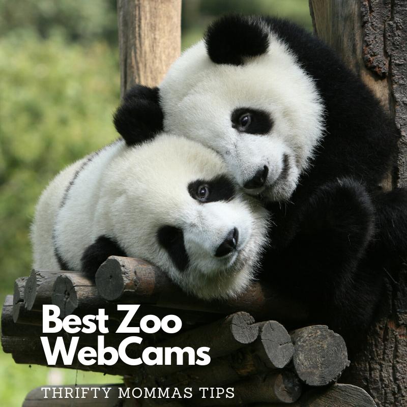 best_zoo_webcams