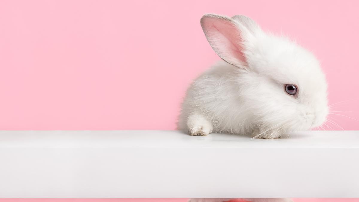 bunny_fun